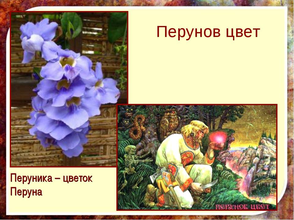 Перунов цвет Перуника – цветок Перуна