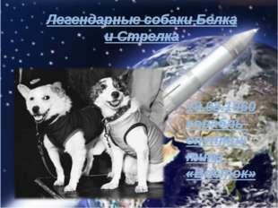 Легендарные собаки Белка и Стрелка 19.08.1960 корабль-спутник типа «Восток»