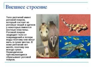 Внешнее строение Тело рептилий имеет роговой покров, который состоит из рогов