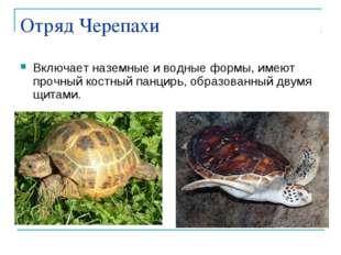 Отряд Черепахи Включает наземные и водные формы, имеют прочный костный панцир
