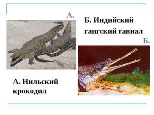 А. Нильский крокодил Б. Индийский гангский гавиал А. Б.