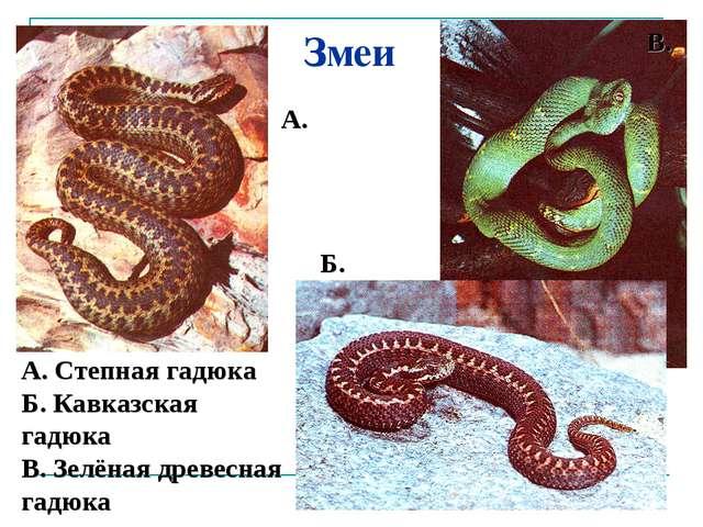 Змеи А. Степная гадюка Б. Кавказская гадюка В. Зелёная древесная гадюка А. Б....