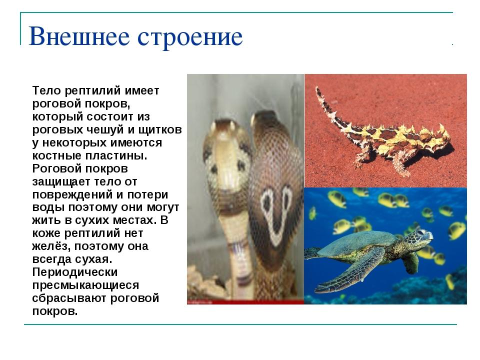 Внешнее строение Тело рептилий имеет роговой покров, который состоит из рогов...