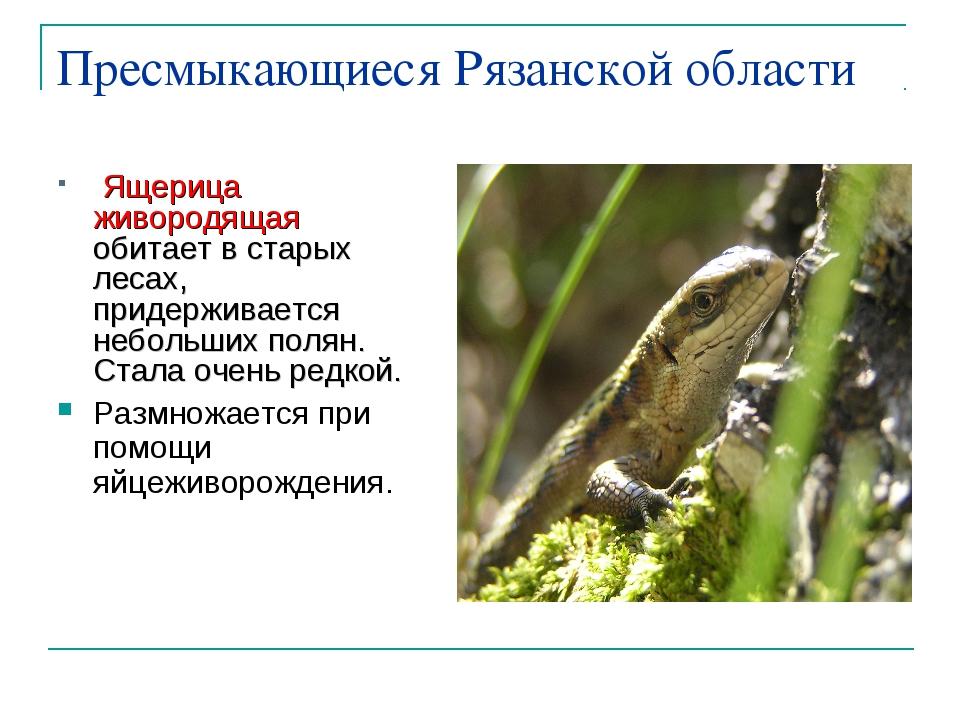 Пресмыкающиеся Рязанской области Ящерица живородящая обитает в старых лесах,...