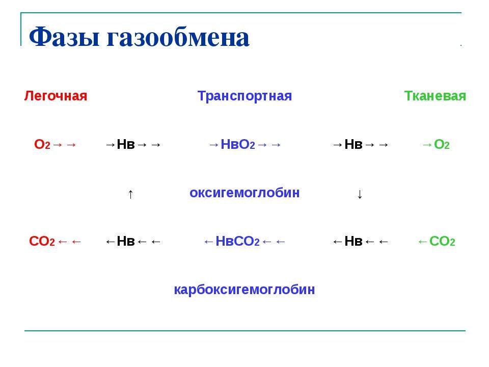 Фазы газообмена