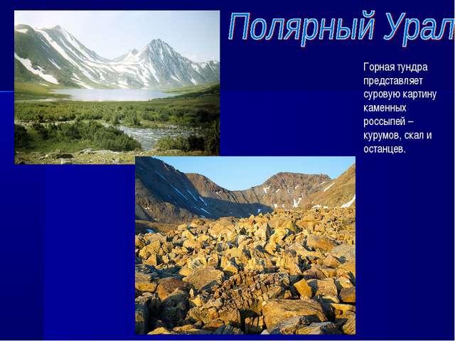 Горная тундра представляет суровую картину каменных россыпей – курумов, скал...