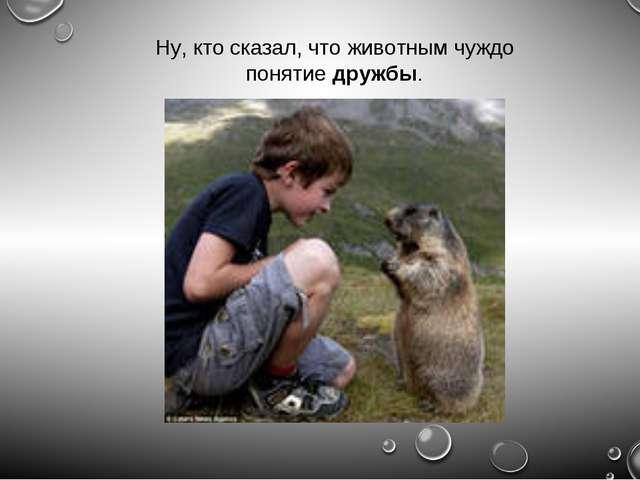 Ну, кто сказал, что животным чуждо понятиедружбы.