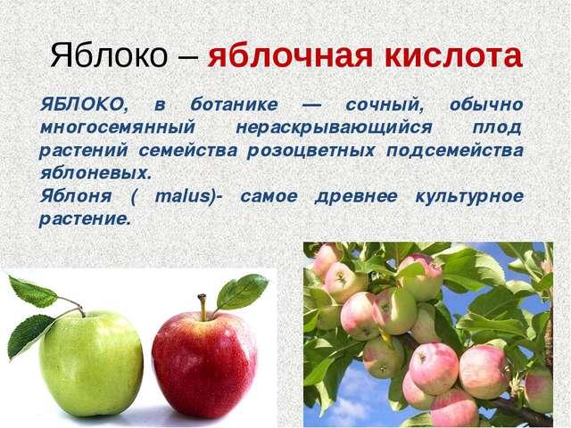 Яблоко – яблочная кислота ЯБЛОКО, в ботанике — сочный, обычно многосемянный н...