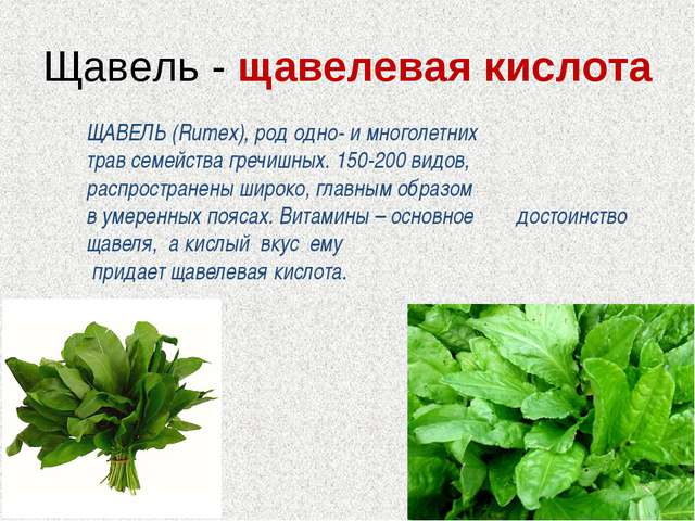 Щавель - щавелевая кислота ЩАВЕЛЬ (Rumex), род одно- и многолетних трав семей...