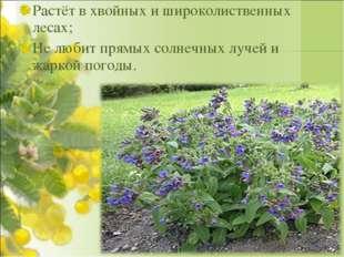 Растёт в хвойных и широколиственных лесах; Не любит прямых солнечных лучей и