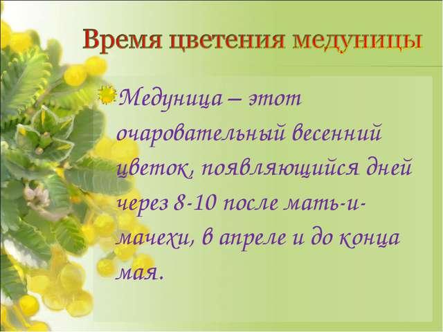 Медуница – этот очаровательный весенний цветок, появляющийся дней через 8-10...