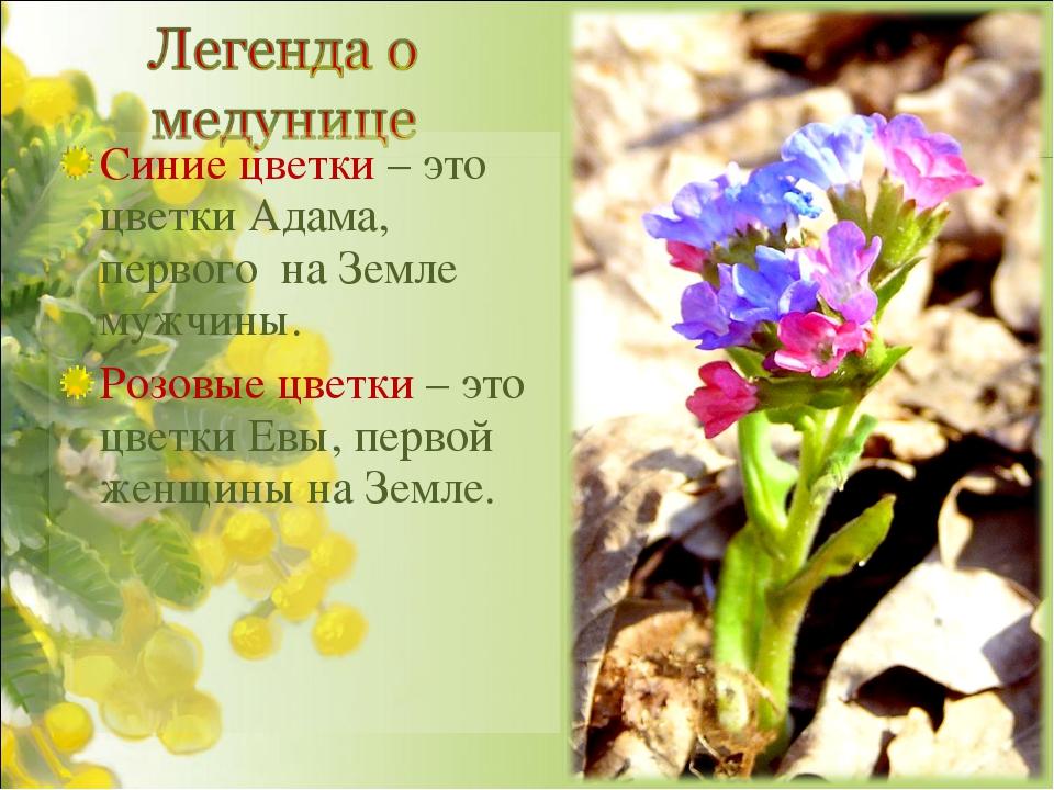 Синие цветки – это цветки Адама, первого на Земле мужчины. Розовые цветки – э...