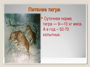 Питание тигра Суточная норма тигра— 9—10кг мяса. А в год – 50-70 копытных.
