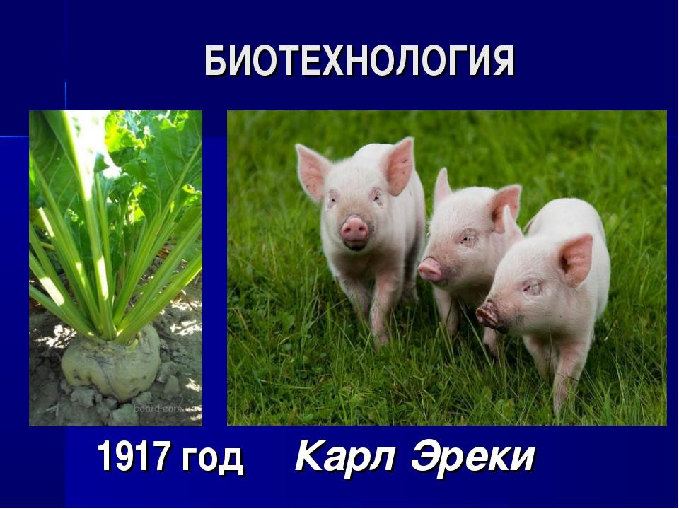 БИОТЕХНОЛОГИЯ 1917 год Карл Эреки