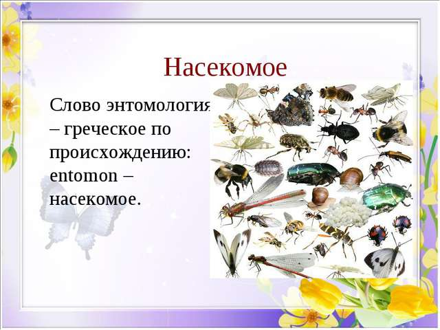Насекомое Слово энтомология – греческое по происхождению: entomon – насекомое.