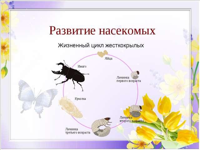 Развитие насекомых