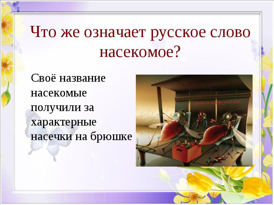 Что же означает русское слово насекомое? Своё название насекомые получили за...