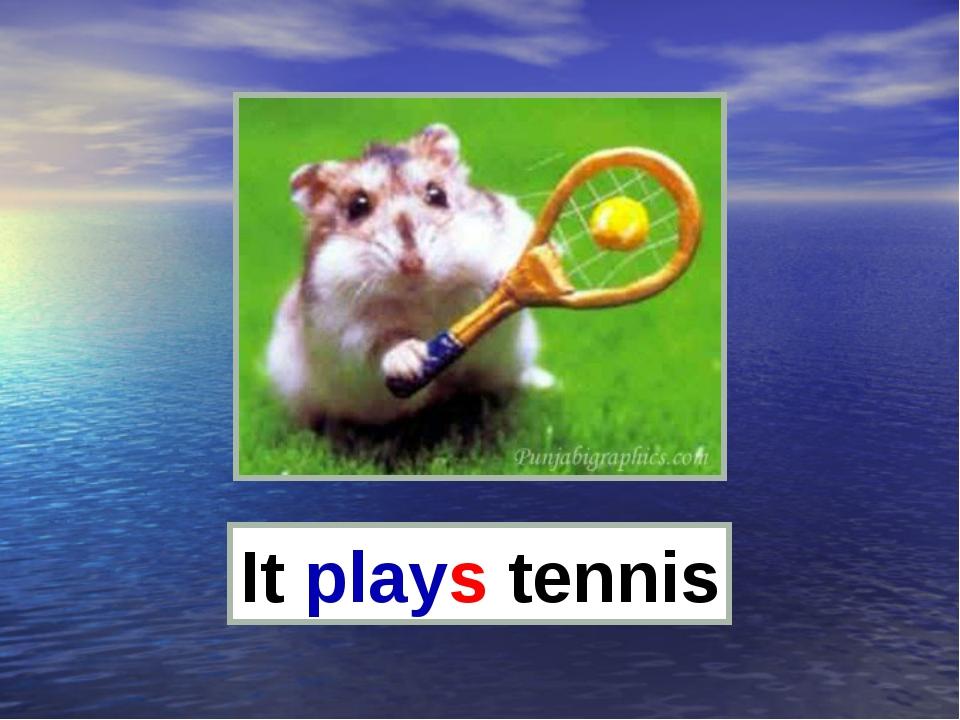 It plays tennis