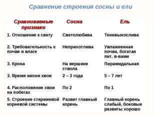 Сравнение строения сосны и ели Сравниваемые признакиСоснаЕль 1. Отношение