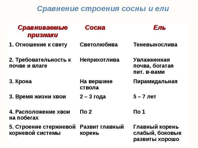 Сравнение строения сосны и ели Сравниваемые признакиСоснаЕль 1. Отношение...