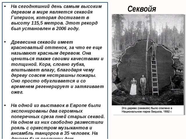 Секвойя На сегодняшний день самым высоким деревом в мире является секвойя Гип...