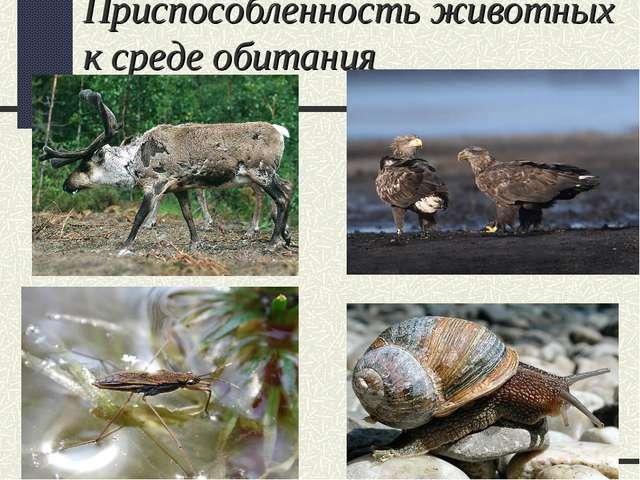 Приспособленность животных к среде обитания