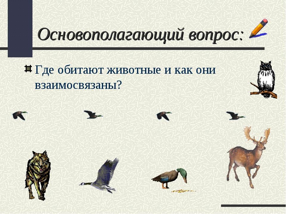 Основополагающий вопрос: Где обитают животные и как они взаимосвязаны?