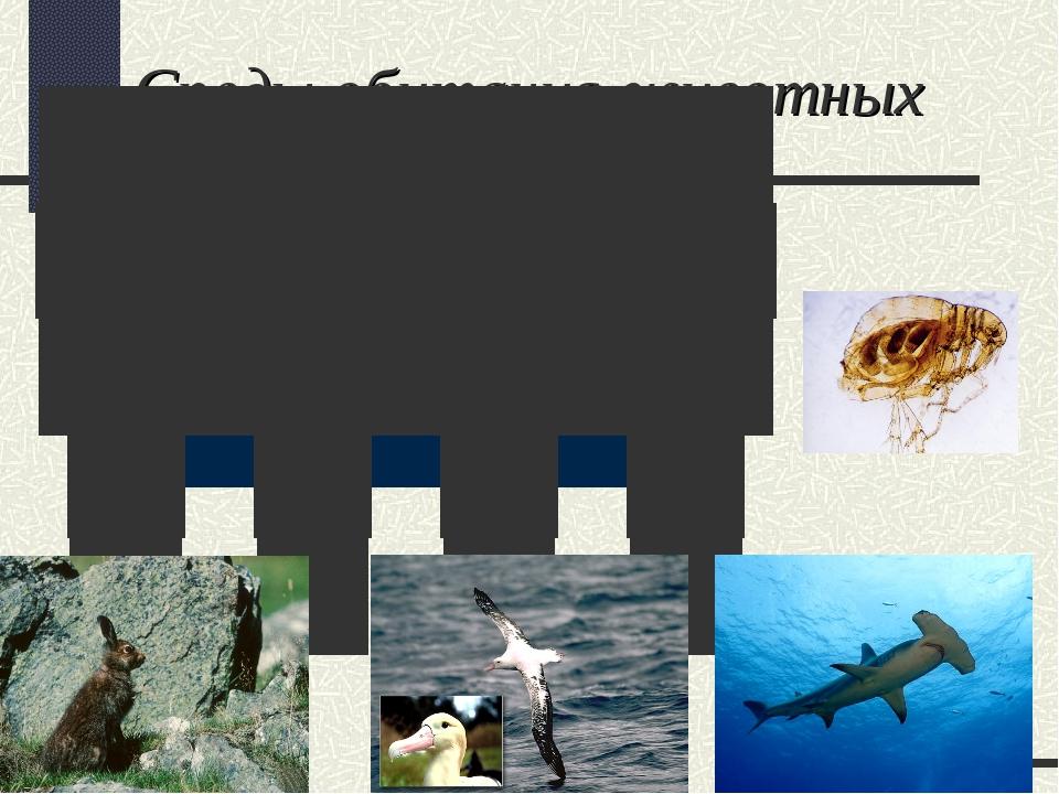 Среды обитания животных