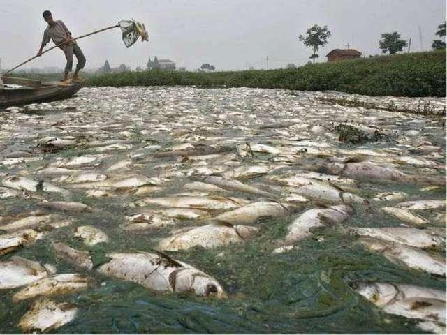 Water pollution Загрязнение воды
