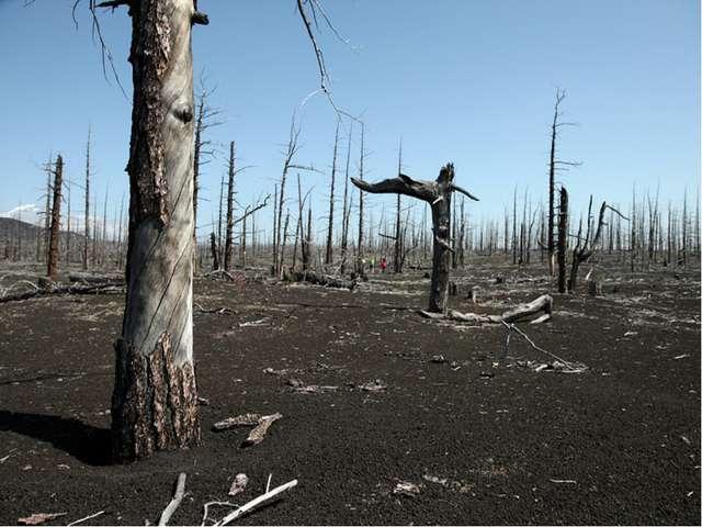 To cut down trees Вырубка лесов