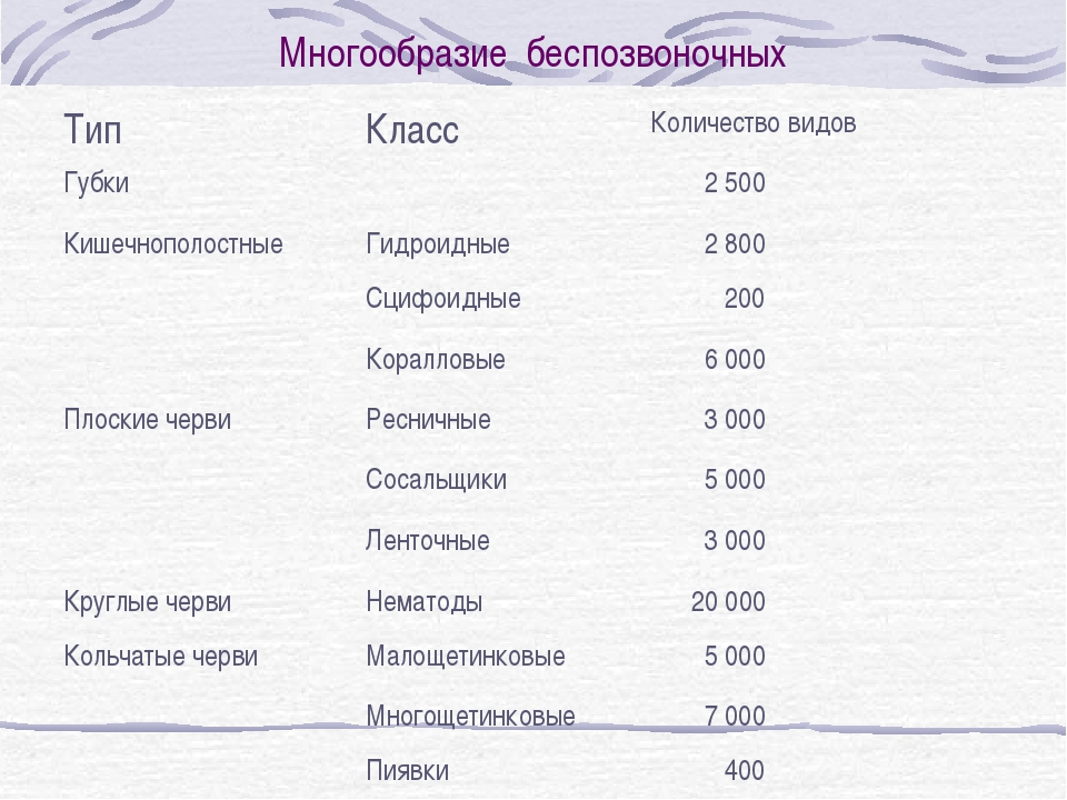 Многообразие беспозвоночных ТипКлассКоличество видов Губки 2 500 Кишечноп...