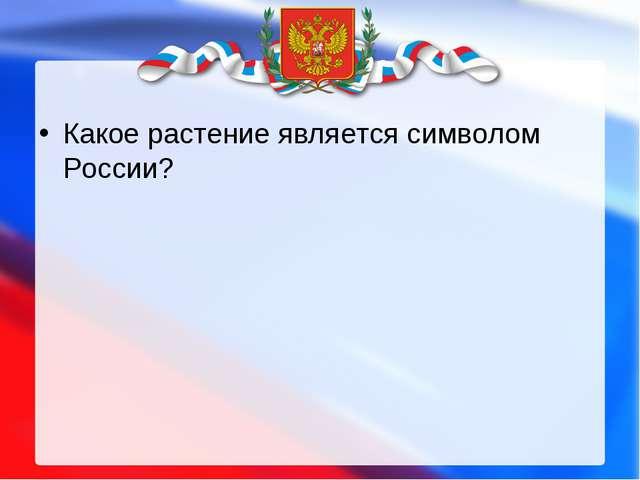 Какое растение является символом России?