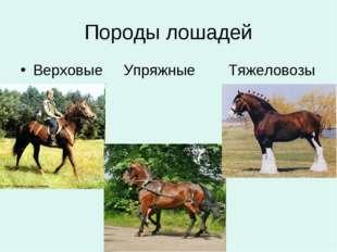 Породы лошадей Верховые Упряжные Тяжеловозы