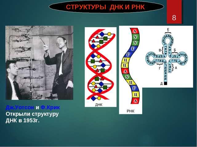* СТРУКТУРЫ ДНК И РНК Дж.Уотсон и Ф.Крик Открыли структуру ДНК в 1953г.
