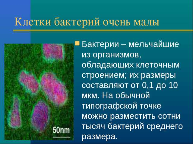 Клетки бактерий очень малы Бактерии – мельчайшие из организмов, обладающих кл...