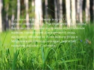 В далекие от нас времена вокруг Сосновки шумел сосновый бор. Высокие мачтовые