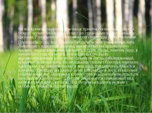 Во все времена чарующе красива и приятна сосновская природа. Вокруг шумят лес