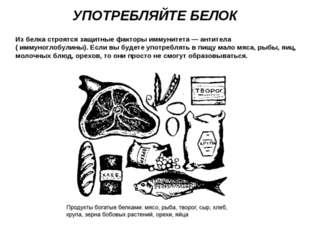 УПОТРЕБЛЯЙТЕ БЕЛОК Из белка строятся защитные факторы иммунитета — антитела (
