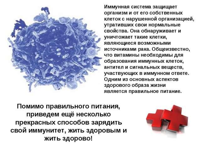 Иммунная система защищает организм и от его собственных клеток с нарушенной о...