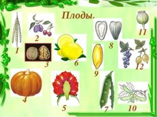 Плоды. 1 4 3 2 6 7 8 9 10 12 11 5