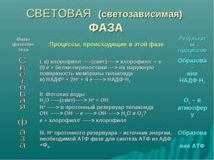 СВЕТОВАЯ (светозависимая) ФАЗА Фазы фотосин- тезаПроцессы, происходящие в эт