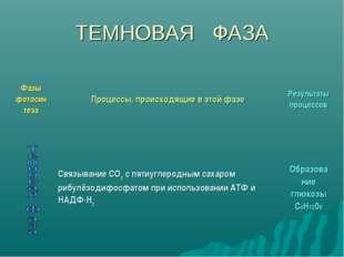 ТЕМНОВАЯ ФАЗА Фазы фотосин тезаПроцессы, происходящие в этой фазеРезультаты