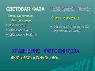 Граны хлоропласта Фотолиз воды Выделение О2 Образование АТФ Образование НАДФ