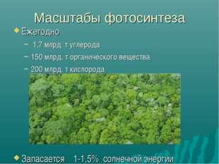 Масштабы фотосинтеза Ежегодно 1,7 млрд. т углерода 150 млрд. т органического