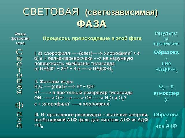 СВЕТОВАЯ (светозависимая) ФАЗА Фазы фотосин- тезаПроцессы, происходящие в эт...