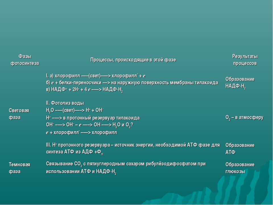 Фазы фотосинтезаПроцессы, происходящие в этой фазеРезультаты процессов Свет...