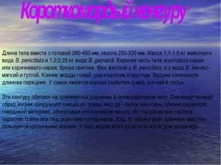 Длина тела вместе с головой 280-450 мм, хвоста 250-330 мм. Масса 1,1-1,6 кг ж