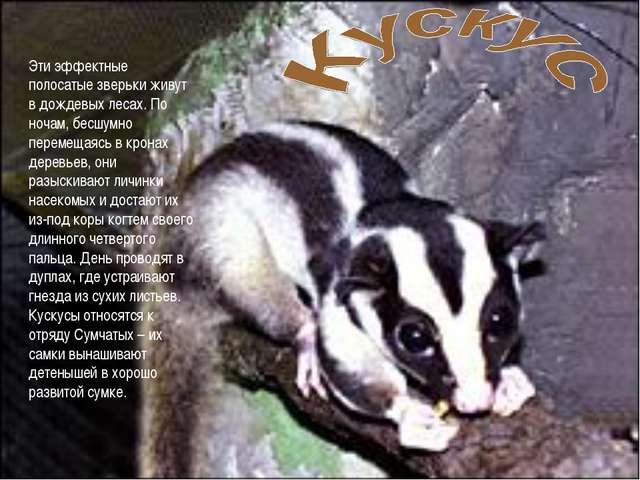 Эти эффектные полосатые зверьки живут в дождевых лесах. По ночам, бесшумно пе...