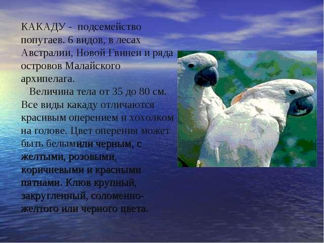 КАКАДУ - подсемейство попугаев. 6 видов, в лесах Австралии, Новой Гвинеи и ря...