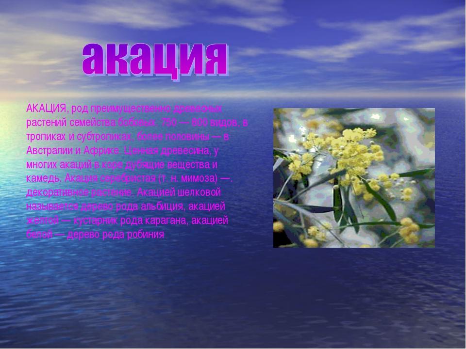 АКАЦИЯ, род преимущественно древесных растений семейства бобовых. 750 — 800 в...